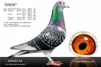 Picture of Chris Hebberecht pigeon BE10-4302423