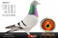 Picture of Chris Hebberecht pigeon BE12-4302255