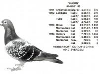 Chris Hebberecht pigeon BE90-4349551