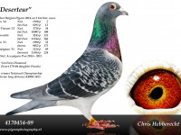 Chris Hebberecht pigeon BE09-4170454