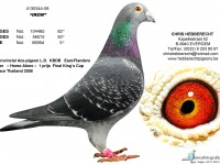 Chris Hebberecht pigeon BE08-4130344