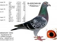 Chris Hebberecht pigeon BE99-4262348