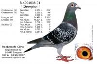 Picture of Chris Hebberecht pigeon BE01-4094638