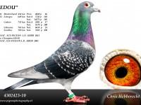 Chris Hebberecht pigeon BE10-4302423