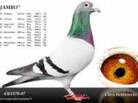 Chris Hebberecht pigeon BE07-4361070