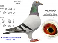 Chris Hebberecht pigeon BE07-4081813